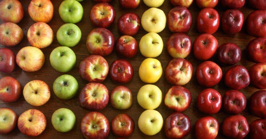 Best Apples to use for Apple Pie