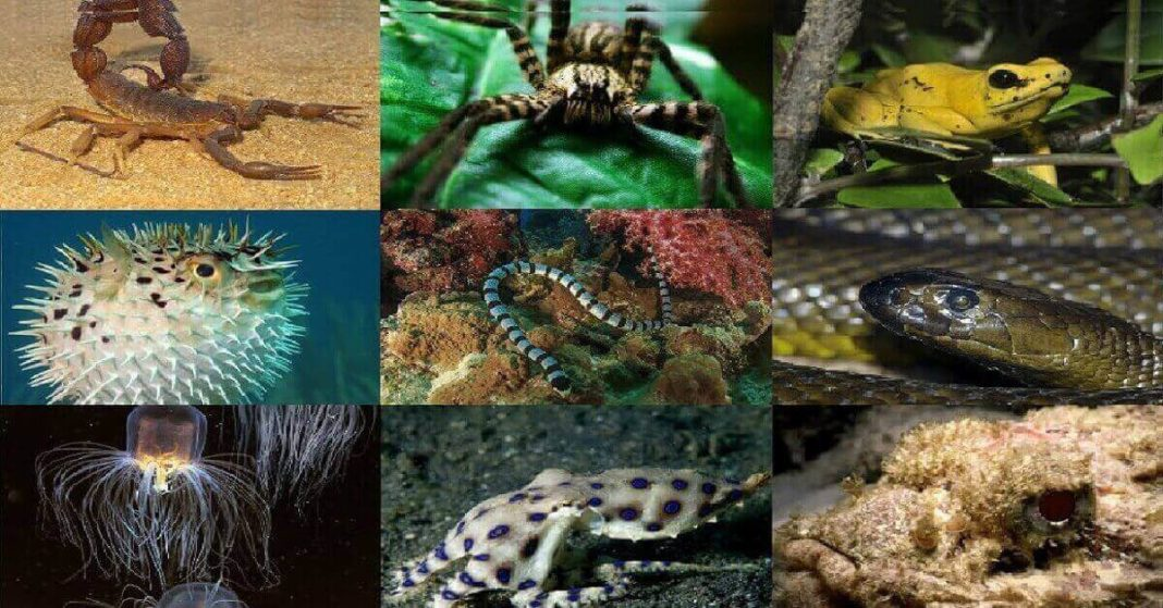 Poisonous Animals in the World