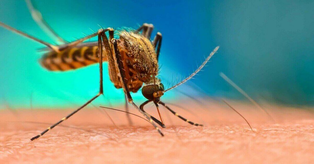 Florida to release 750 million genetically modified mosquitoes into Keys next year