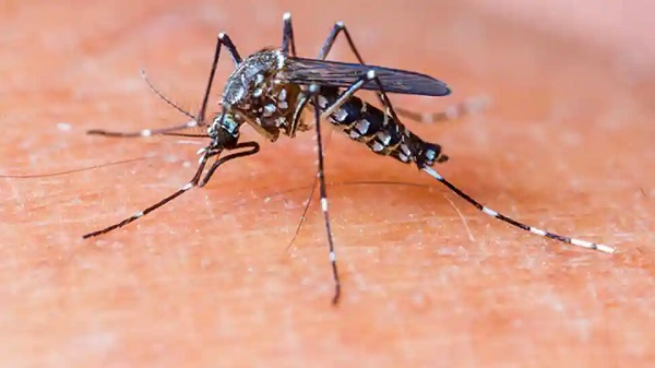 While the world struggles with the COVID-19 pandemic, Dengue record high in Singapore
