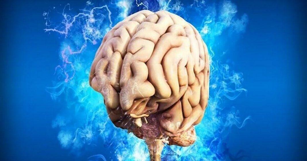 Researchers find Neural Mechanisms