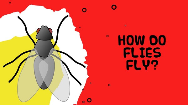 Common Facts About Flies