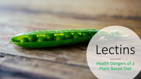 foods are high in lectins