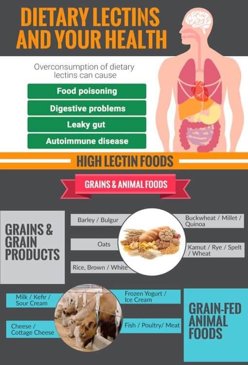Foods That Are High In Lectins: Best Foods