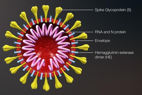 cure for the coronavirus