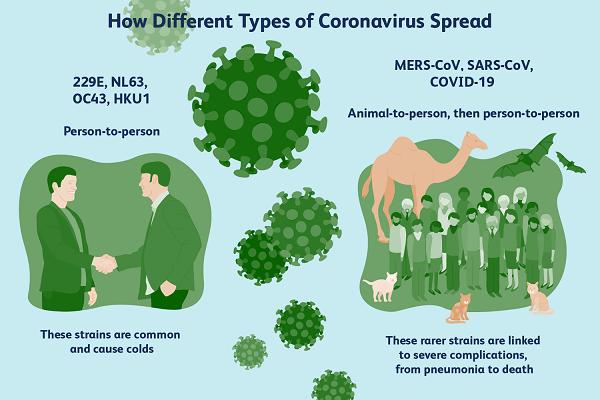 how different types of coronavirus spread