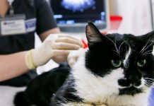 Feline Coronavirus