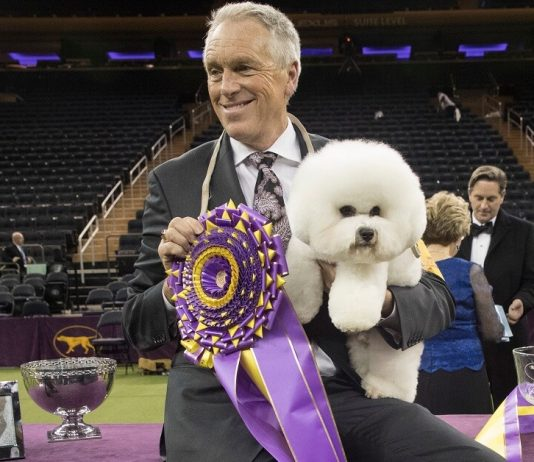 Bill McFadden, the Star Dog Handler, Won't be Able to Attend the Most Awaited Dog Show Due to an Accident