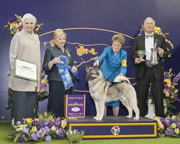Bill McFadden the Star Dog Handler Wont be Able to Attend the Most Awaited Dog Show Due to an Accident 3