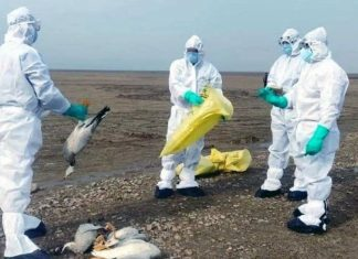 First human case of H10N3 bird flu recorded in China