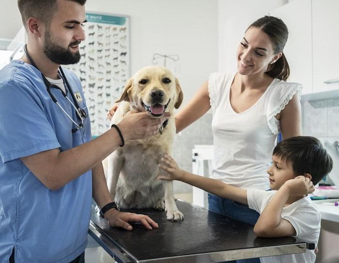 Pet Care Assistance