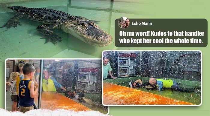 Two brave souls saved a trainer who got attacked by an Alligator
