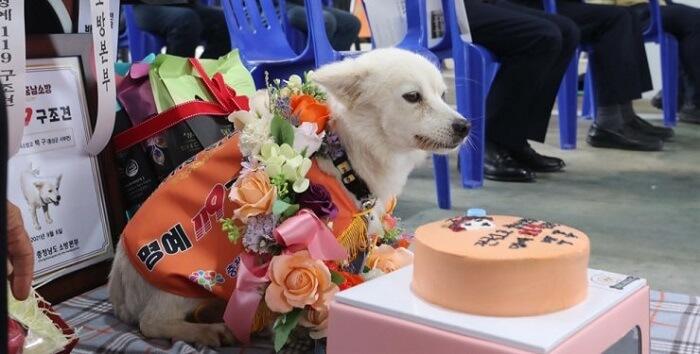 A dog named Baekgu, who saved the life of his owner in South Korea